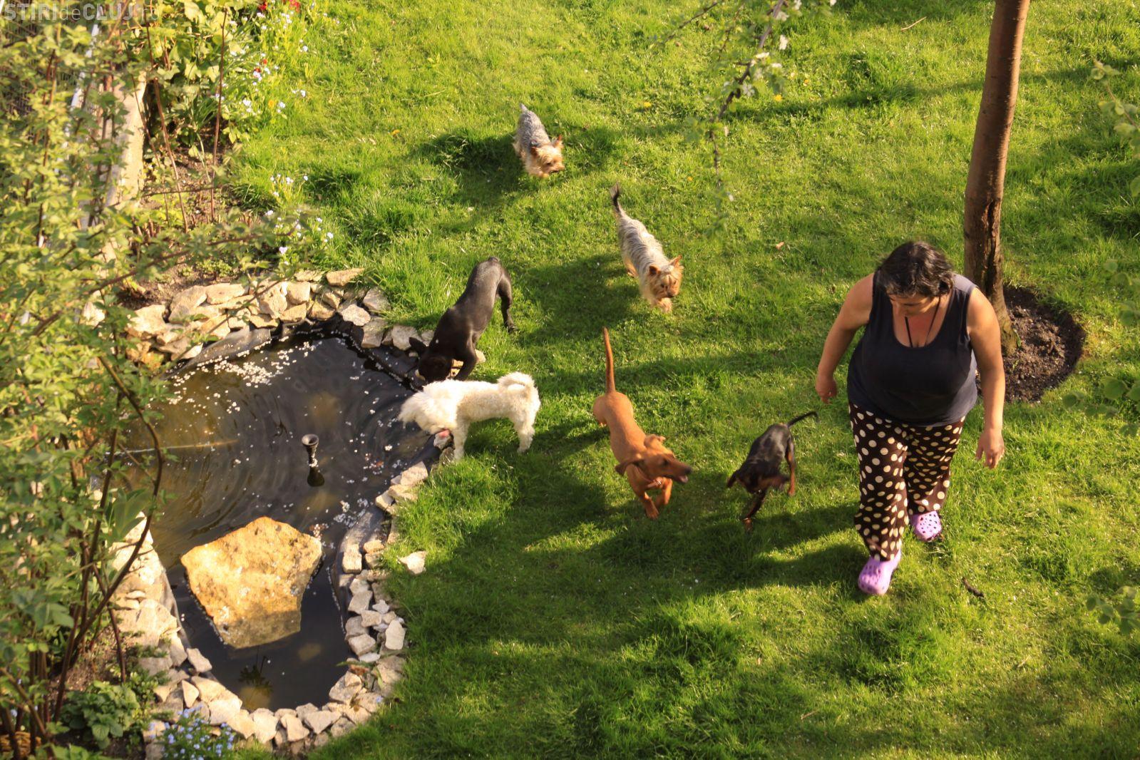 Pet Hotel Cluj, locul unde clujenii își pot caza animalele de companie când pleacă în vacanță FOTO