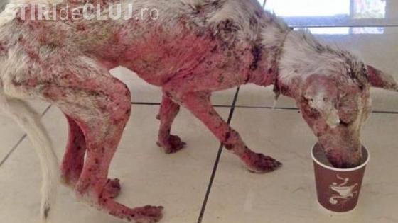 Au SALVAT acest câine de la moarte sigură. E INCREDIBIL cum arata acum - FOTO