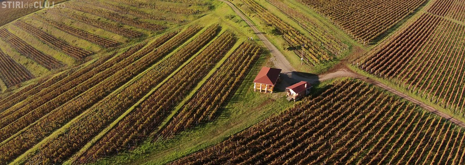 Vinul De Turda De La Crama La Salină Pune Clujul Pe Harta Viticolă
