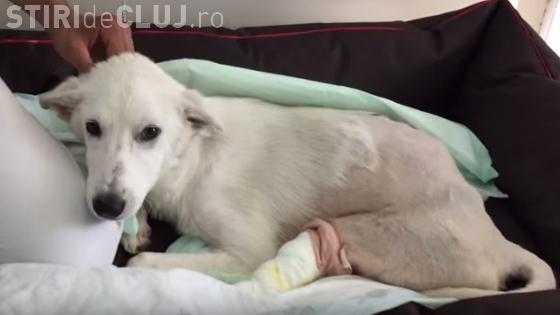 Povestea impresionantă a unui câine paralizat, după un accident auto. Ce a urmat e un MIRACOL