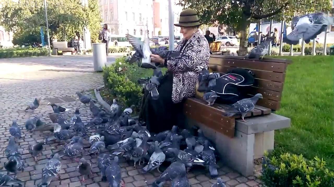 Porumbeii din Piata Avram Iancu - Simplitate si bucurie - VIDEO NO COMMENT