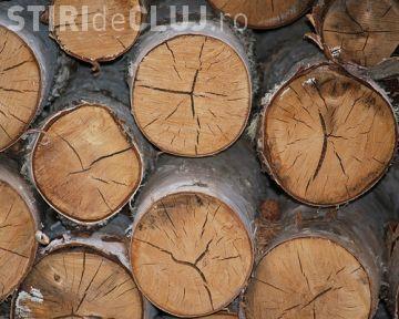 Razie la un depozit din Cluj! Polițiștii au confiscat material lemnos de peste 4.000 euro
