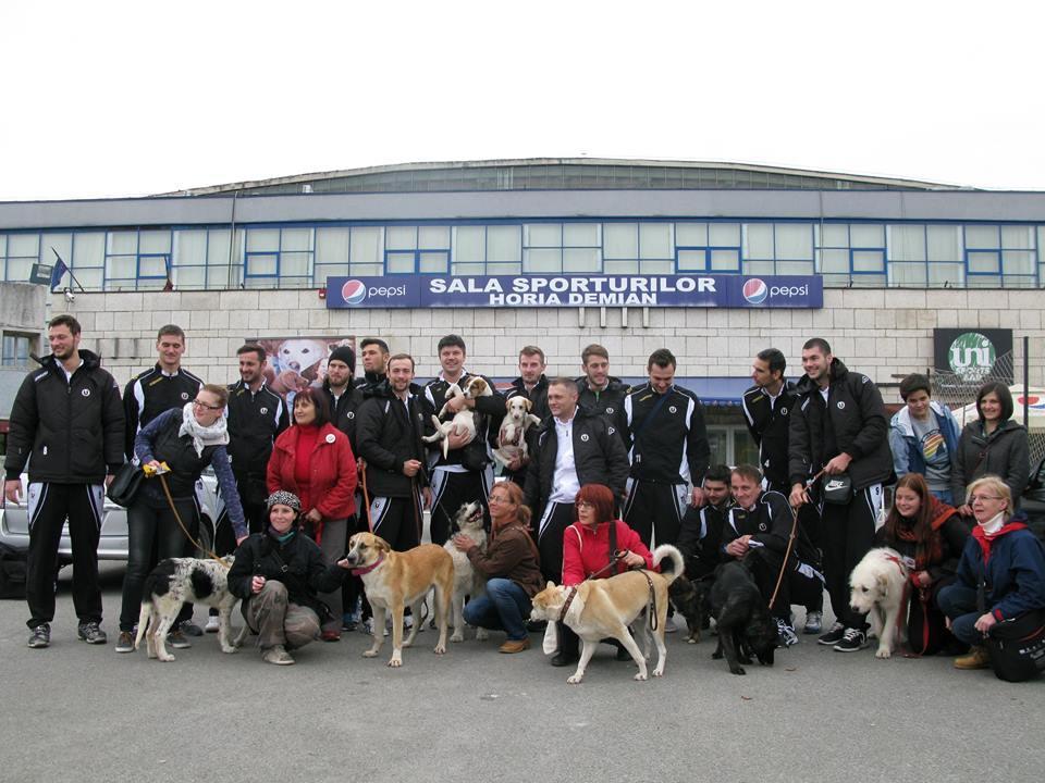 Voleibaliștii de la U Cluj susțin câinii fără stăpân și Asociația Arca lui Noe - FOTO