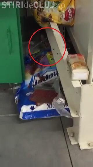 A găsit o pisică în Auchan Cluj! Animalul se plimba între rafturi. Unde e IGIENA? - VIDEO
