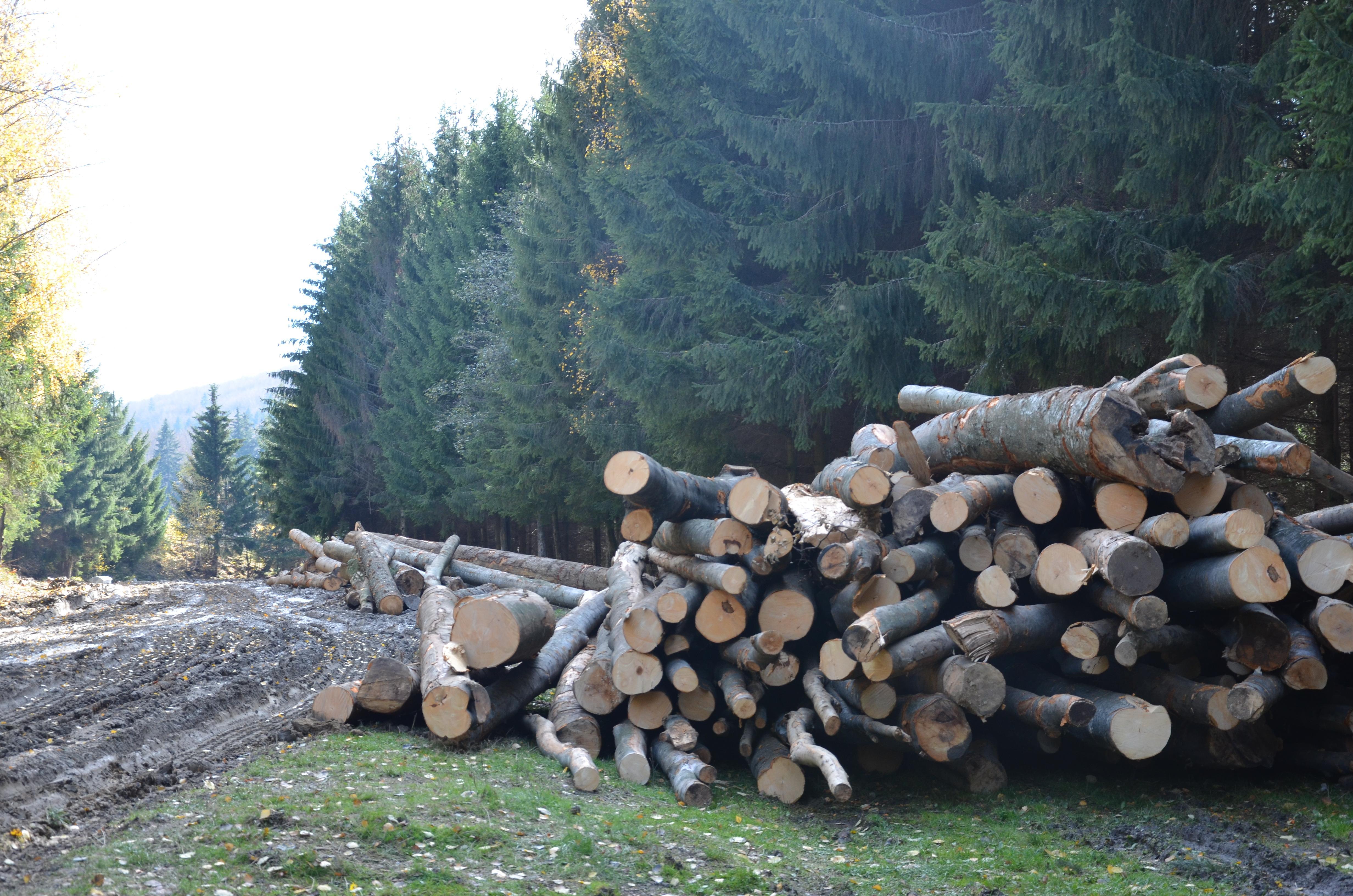 Mari JUCĂTORI din domeniul lemnului, investigați de Consiliul Concurenței