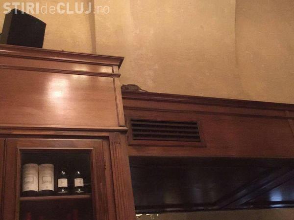 Reacția Toulouse după apariția fotografiilor cu un șobolan care se plimba prin cafenea