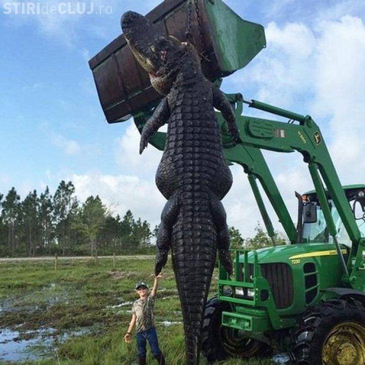 Cum arată aligatorul monstru. Au rămas interziși când au văzut ce avea în stomac