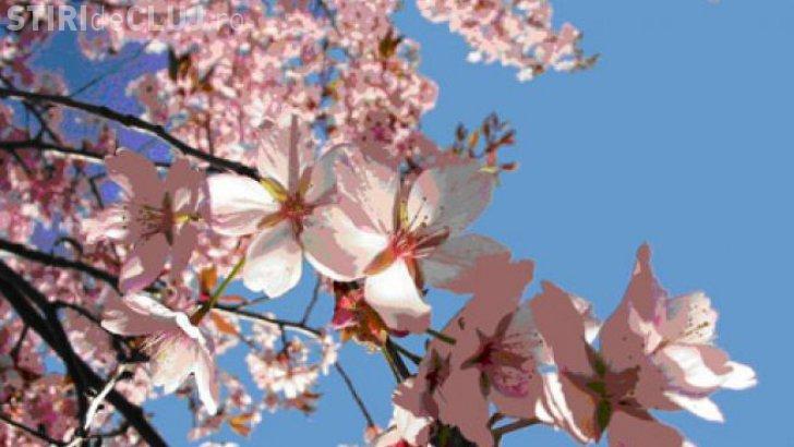 Cum va fi vremea Paşte și Florii?