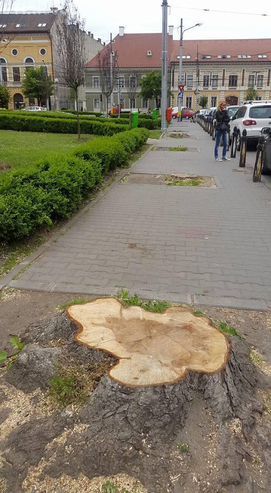De ce au fost tăiați castanii din Piața Avram Iancu - FOTO