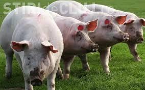 Alertă de pestă porcină la granița cu România. Ce măsuri s-au instaurat