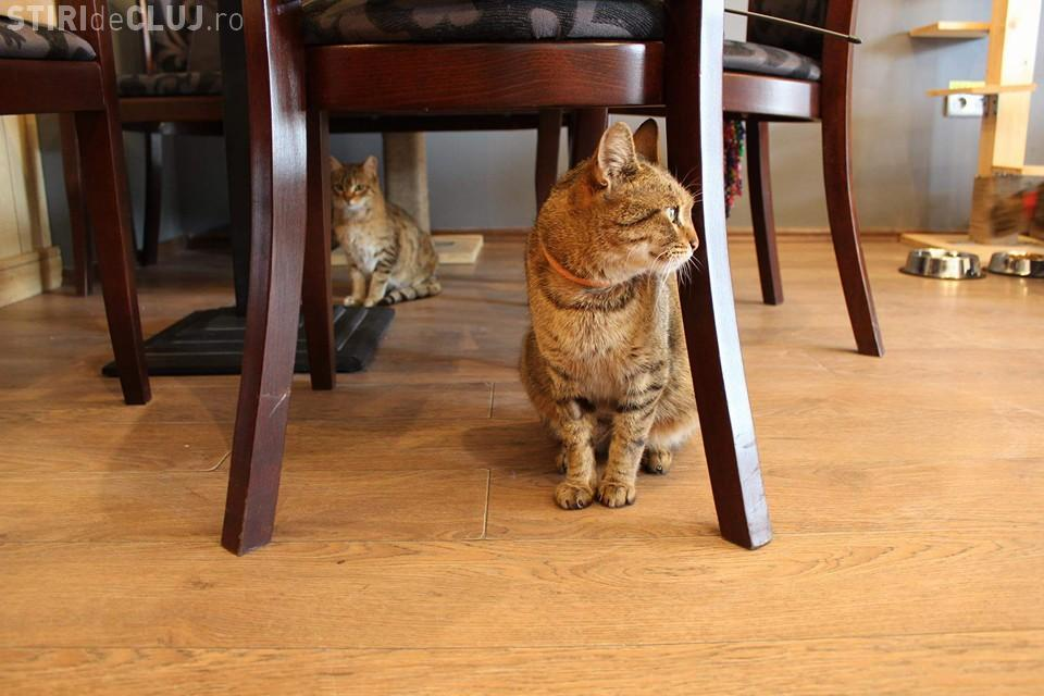 Cafeneaua cu pisici din Cluj-Napoca se închide