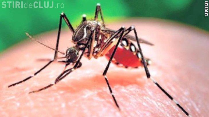 Virusul Zika, confirmat în România. O tânără de 27 de ani este internată