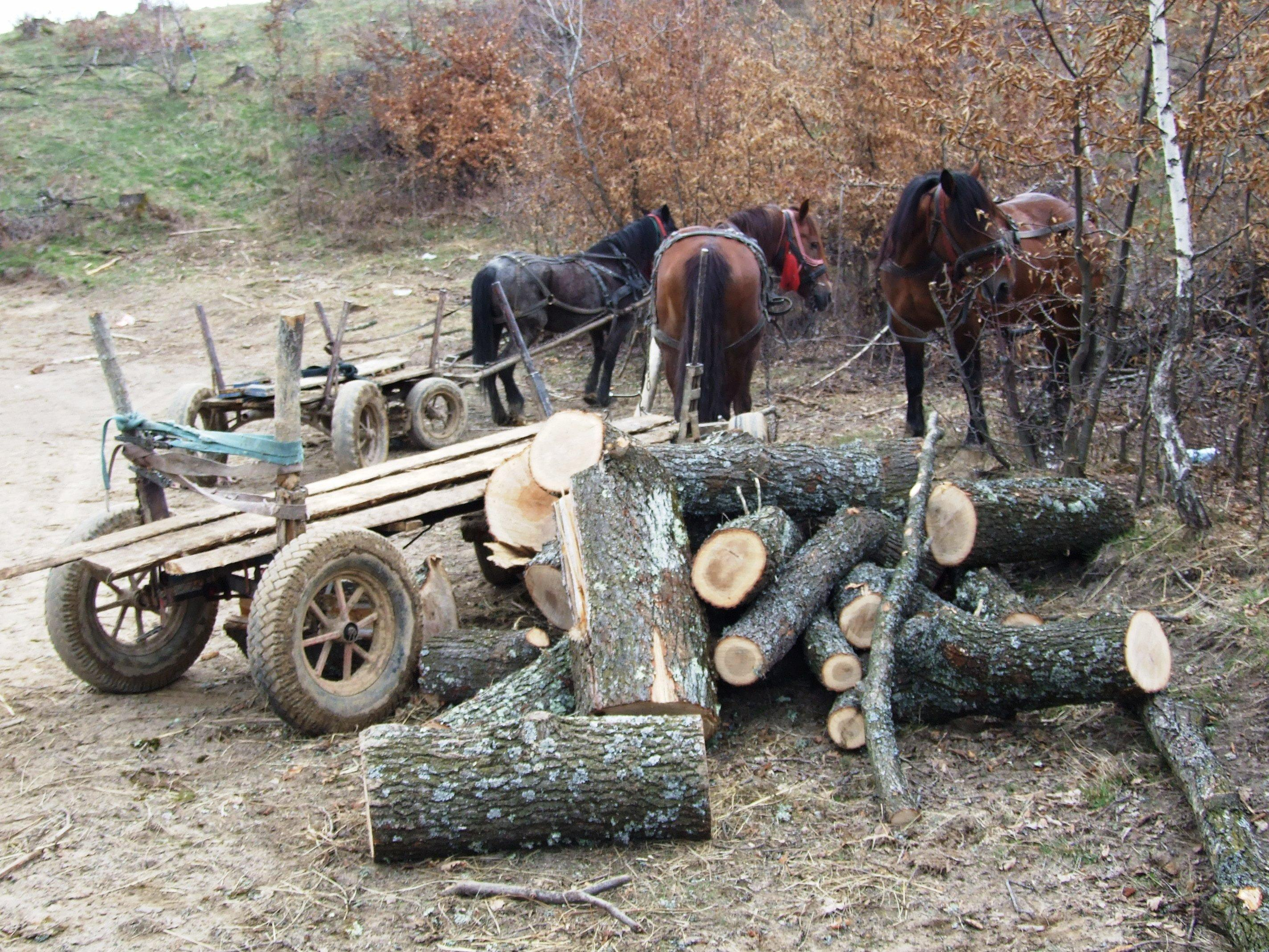 Cât de mult se defrișează ilegal la Cluj? Polițiștii au confiscat lemne de peste 150.000 lei în doar o luna