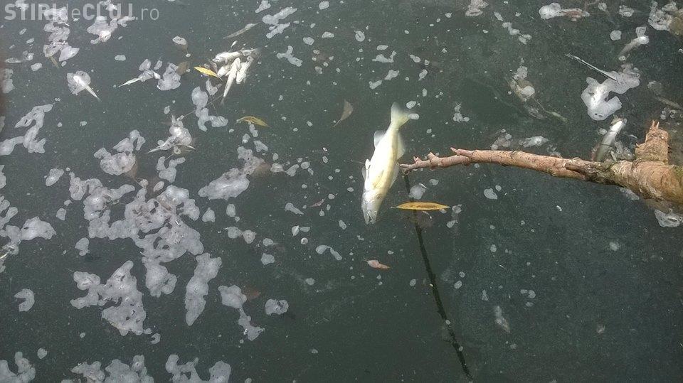 Sute de pești morți pe lacul din Gheorgheni - FOTO