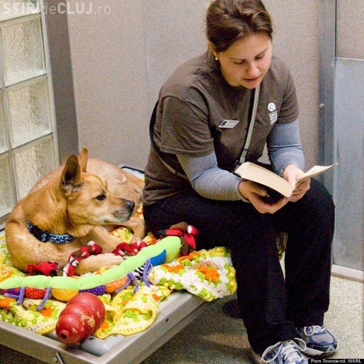 Povestea IMPRESIONANTĂ a unui câine care nu a vrut să fie adoptat
