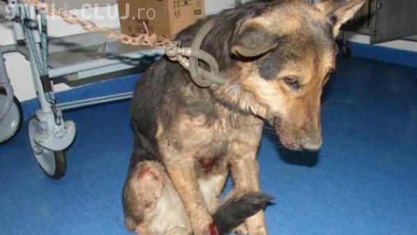 Închisoare de la 2 la 7 ani pentru cei care maltratează animalele