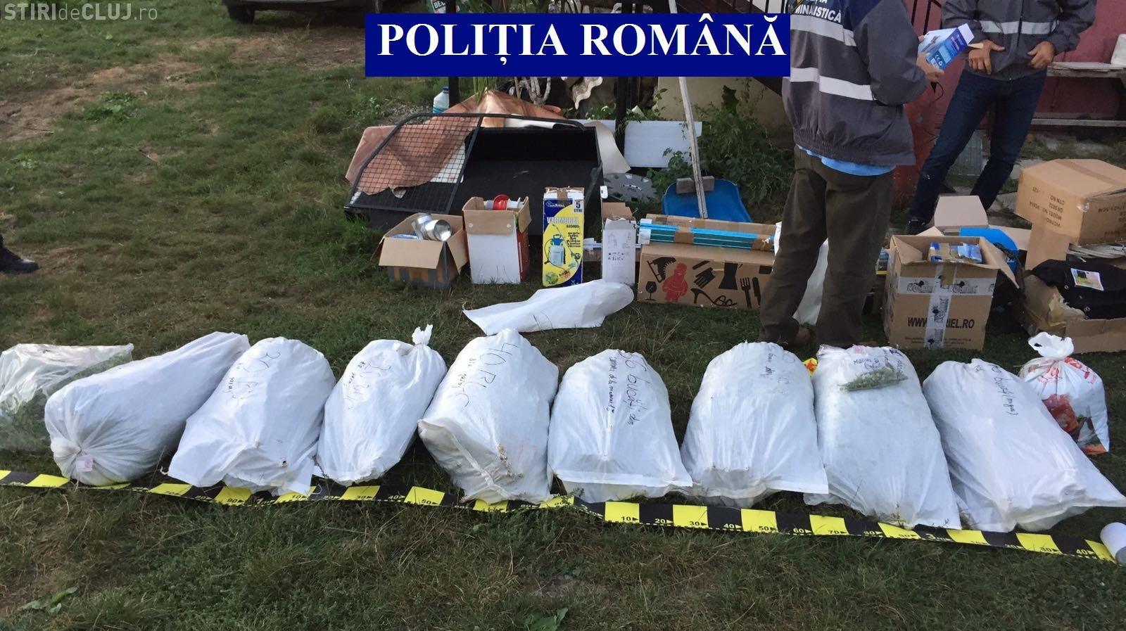 Captură URIAȘĂ de marijuana la Cluj! Polițiștii au găsit aproape 600 de plante și peste 100 de kg de canabis mărunțit FOTO