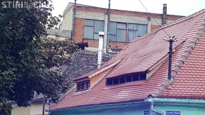 Un urs a terorizat Sibiul! S-a urcat pe acoperișul unei case și a fost împușcat - VIDEO