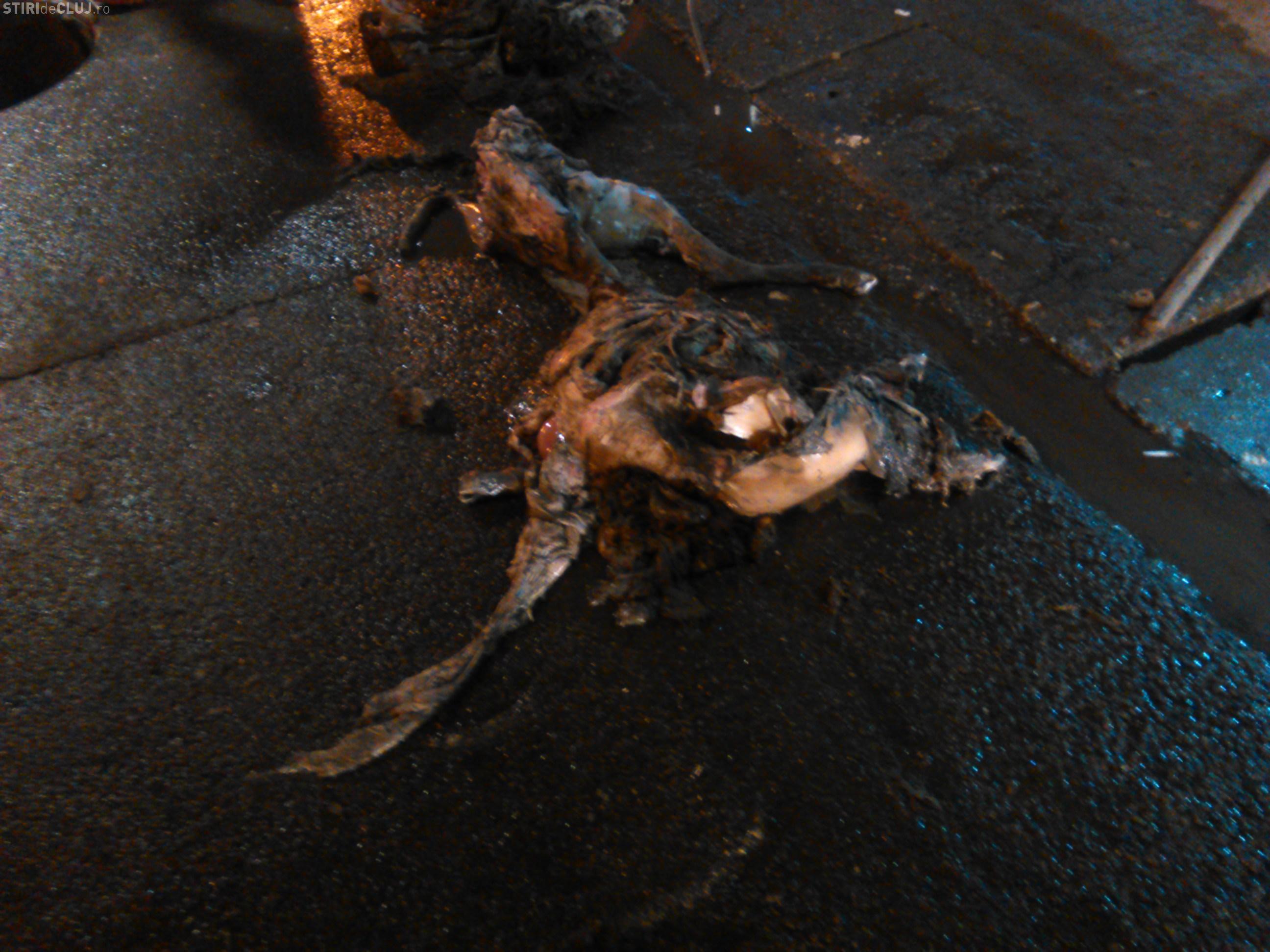 Florești - O oaie moartă înfunda canalizarea de pe strada Avram Iancu - FOTO