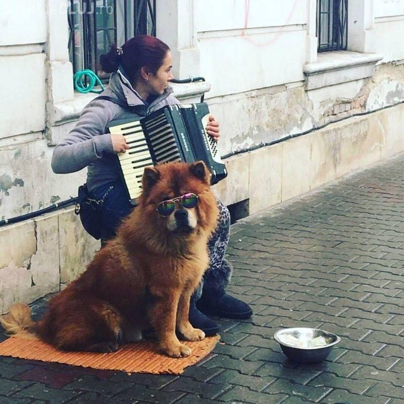 Cerșea în centrul Clujului și brutaliza un biet câine. O clujeancă a luat atitudine