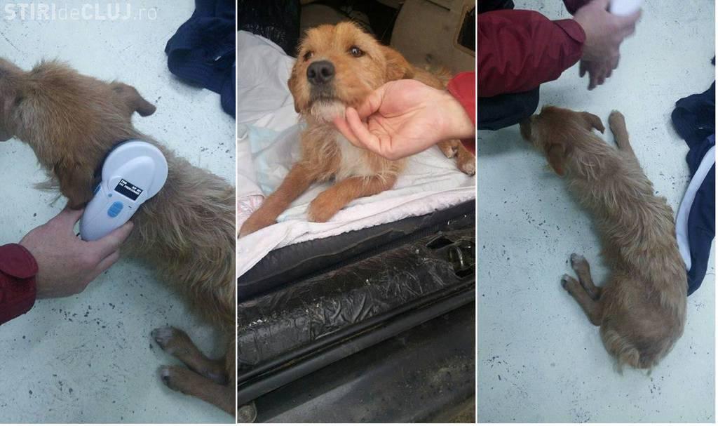 Angajat al Primăriei Dej, cercetat de polițiști pentru abandonul unui câine. Nu este la prima abatere privind violența asupra animalelor