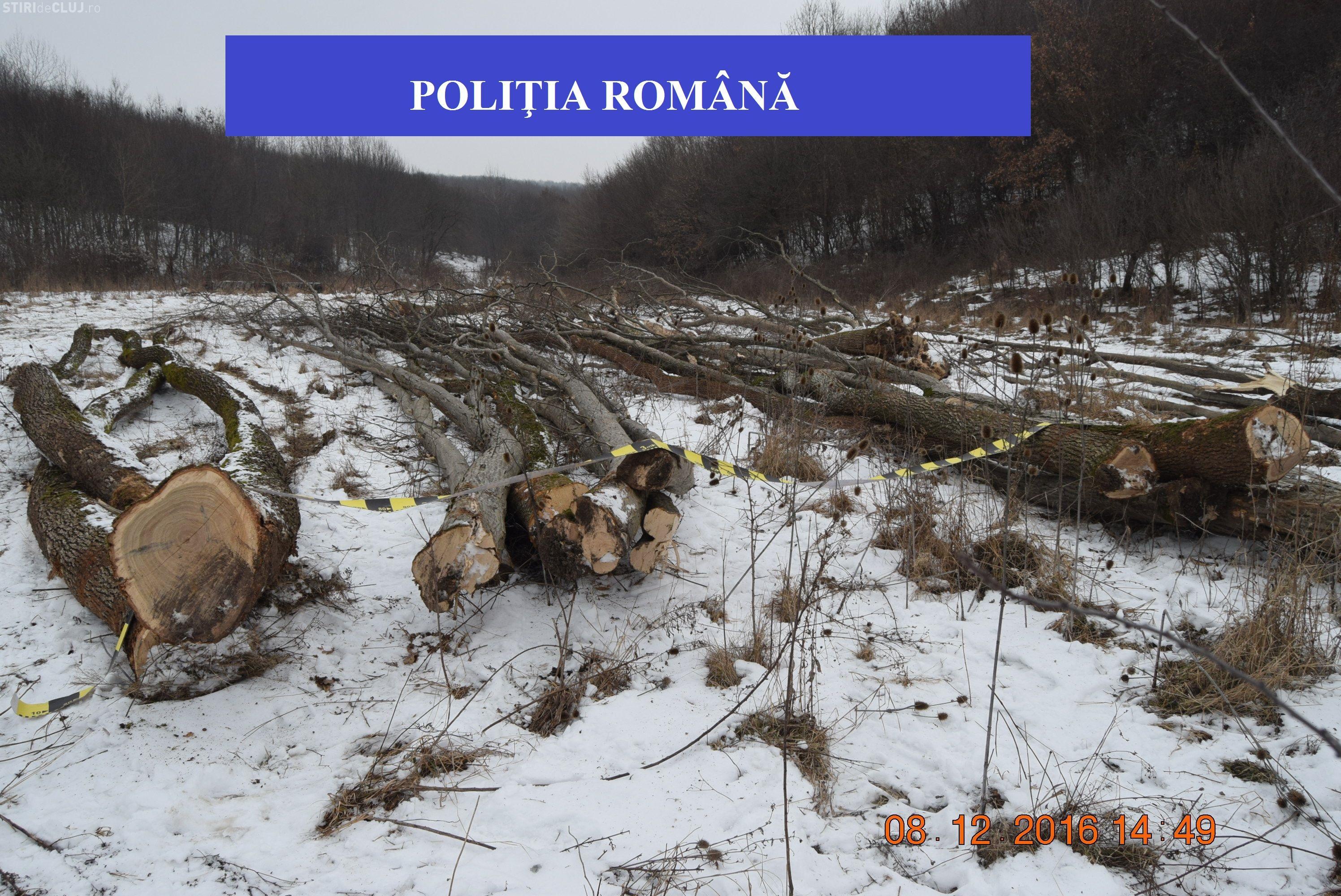 Clujean cercetat pentru tăieri ilegale de arbori