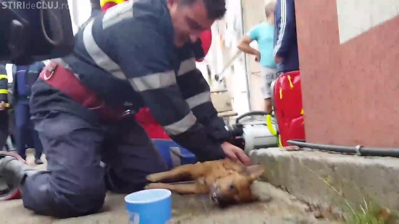 VIDEO: Câine resuscitat de un pompier din Pitești! Imagini emoționante