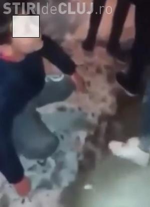 Baiat UMILIT si BATUT de o gasca de cartier! Au filmat si postat totul pe Facebook - VIDEO