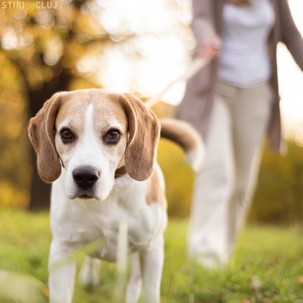 Clujeancă HĂRȚUITĂ de Poliția Locală când își ducea câinii la parcul special amenajat