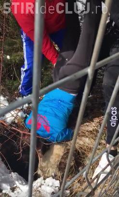 Câine salvat de antrenorul clujean de judo, Florin Bercean, şi de judoka Violeta Dumitru - VIDEO
