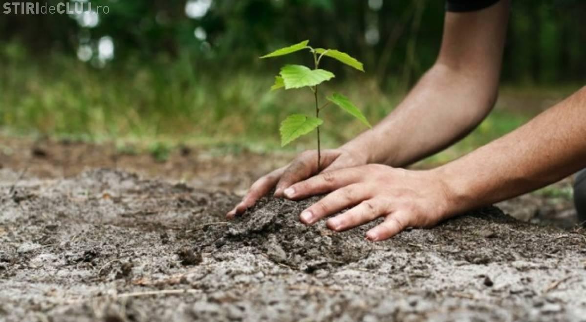 """Mii de elevi clujeni ies la plantat de copaci, în """"Ziua Voluntarilor Mici"""""""