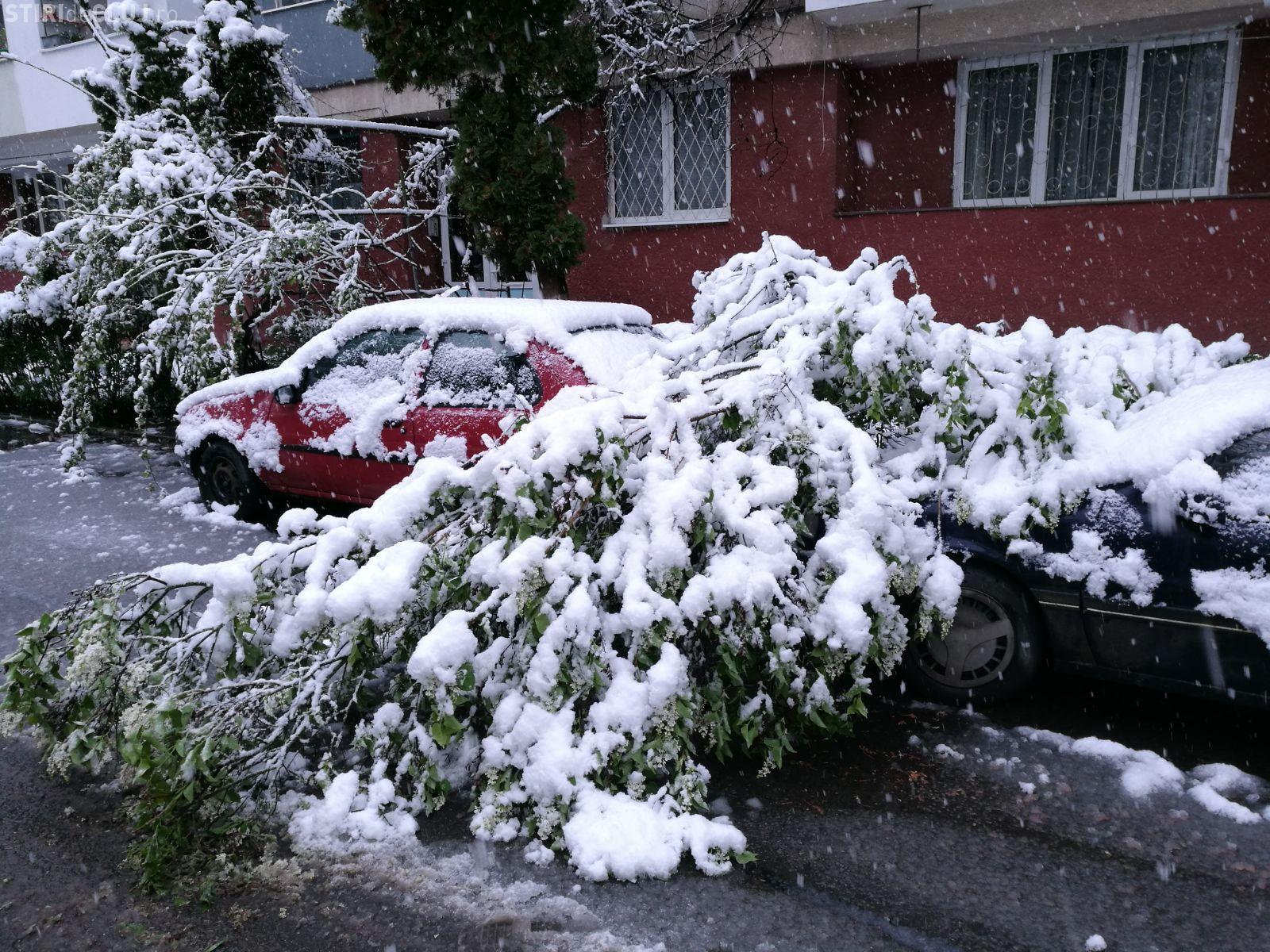 Clujul este sub ZĂPADĂ! Ninge ca iarna în oraș - FOTO