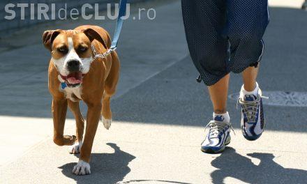 Floreștiul va avea un regulament de deținere a animalelor de companie. Ce amenzi sunt propuse