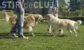 Noi parcuri de joacă pentru câini, la Cluj-Napoca. Vezi unde se află VIDEO