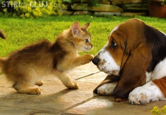 Studenții de la Facultatea de psihologie din cadrul UBB Cluj pot să vina la cursuri cu animalele de companie