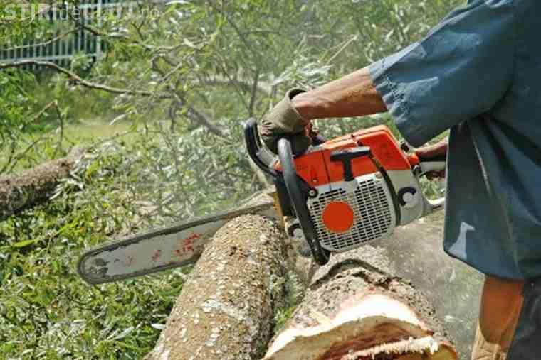 Bărbați din Alba, prinși la furat de lemne în Cluj. Au apucat să taie 20 de arbori până i-au găsit polițiștii