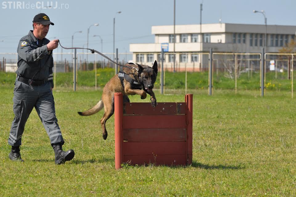 SID, unul dintre cei mai performanți câini ai Vãmii Române, iese la pensie - FOTO