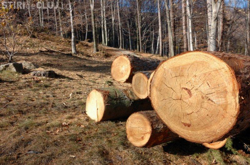 Trei pădurari din Cluj au fost reținuți. Sunt acuzați de furt de arbori în valoare de 250.000 de euro