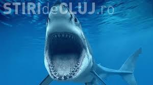 Ce se întâmplă când cel mai decorat sportiv olimpic din istorie se întrece cu un rechin VIDEO