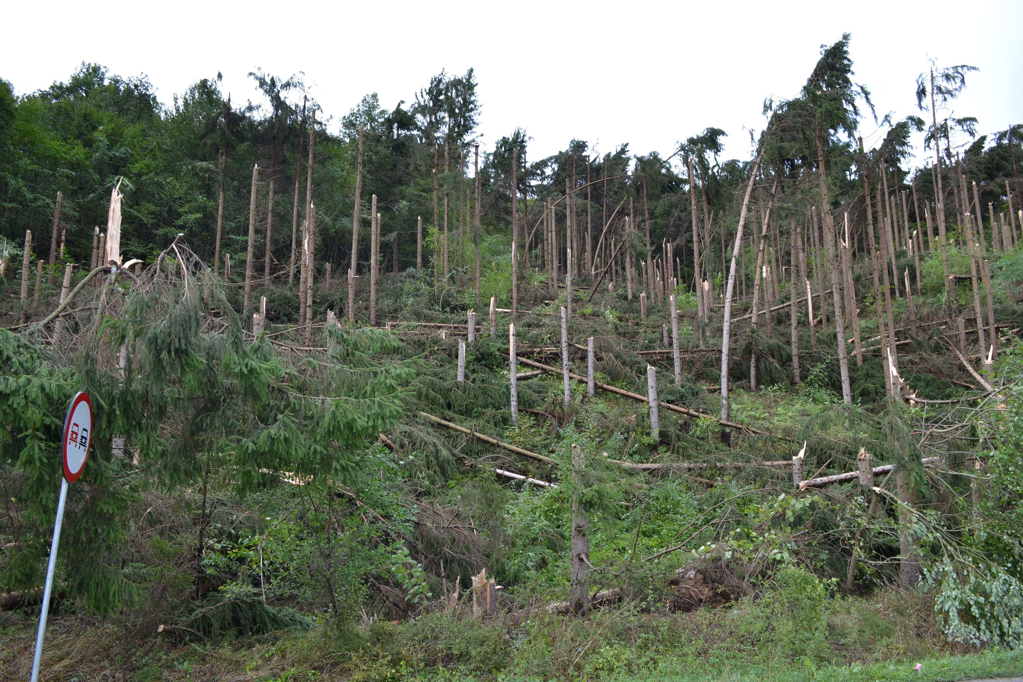 Furtuna de la Cluj a RAS un versant de pădure - FOTO
