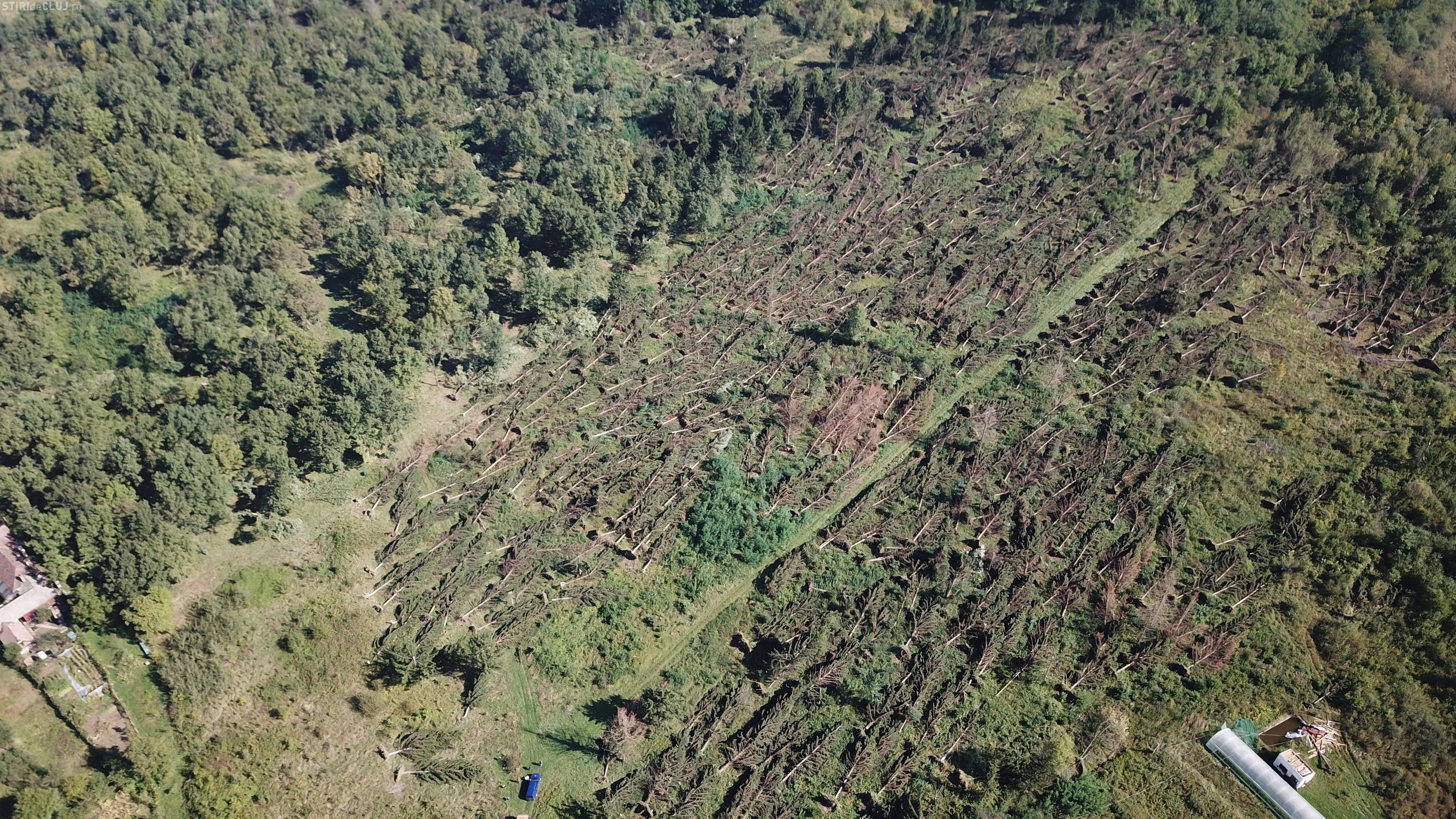 """Mii de hectare de pădure distruse de """"uraganul"""" care a lovit vestul țării - FOTO"""