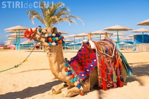 Oferte pentru a călători toamna în Egipt. Zborul e direct din Cluj