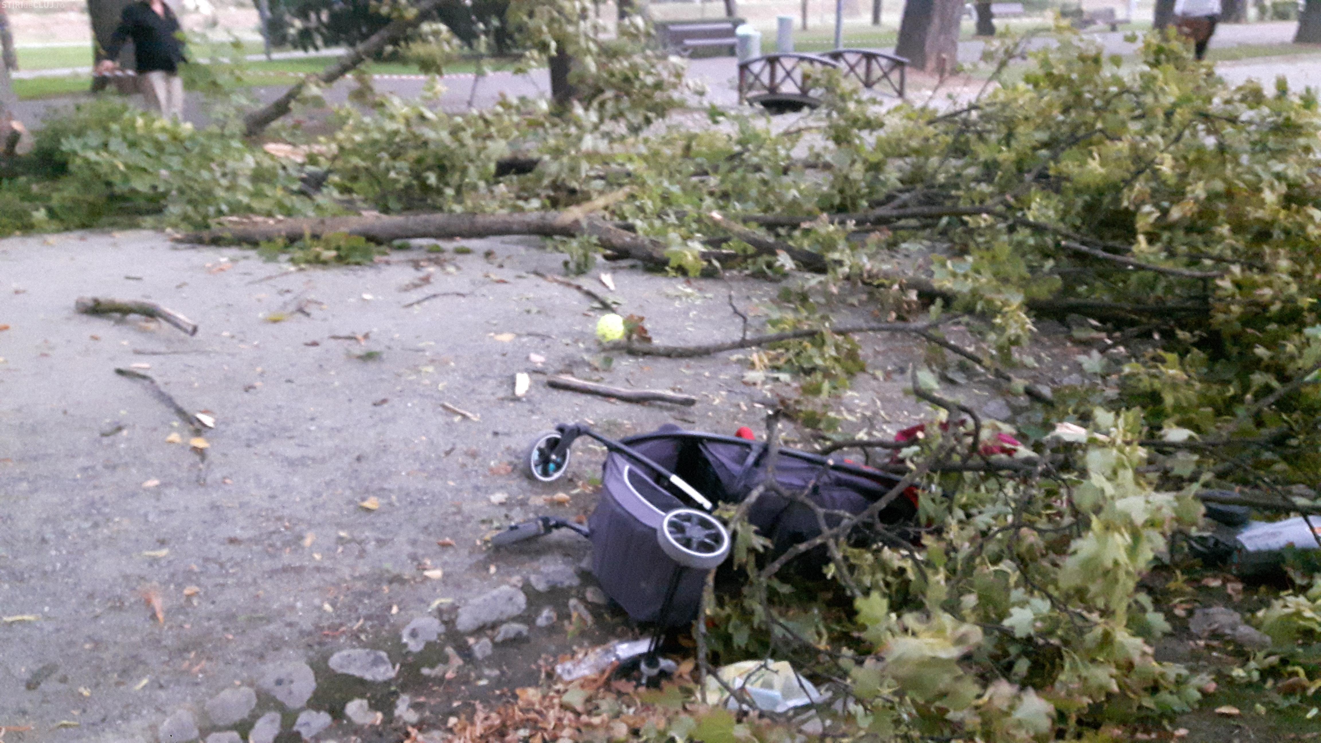 """""""Uraganul"""" de la Cluj a prins o familie în Parcul Central. Copacii cădeau în jurul lor - FOTO"""