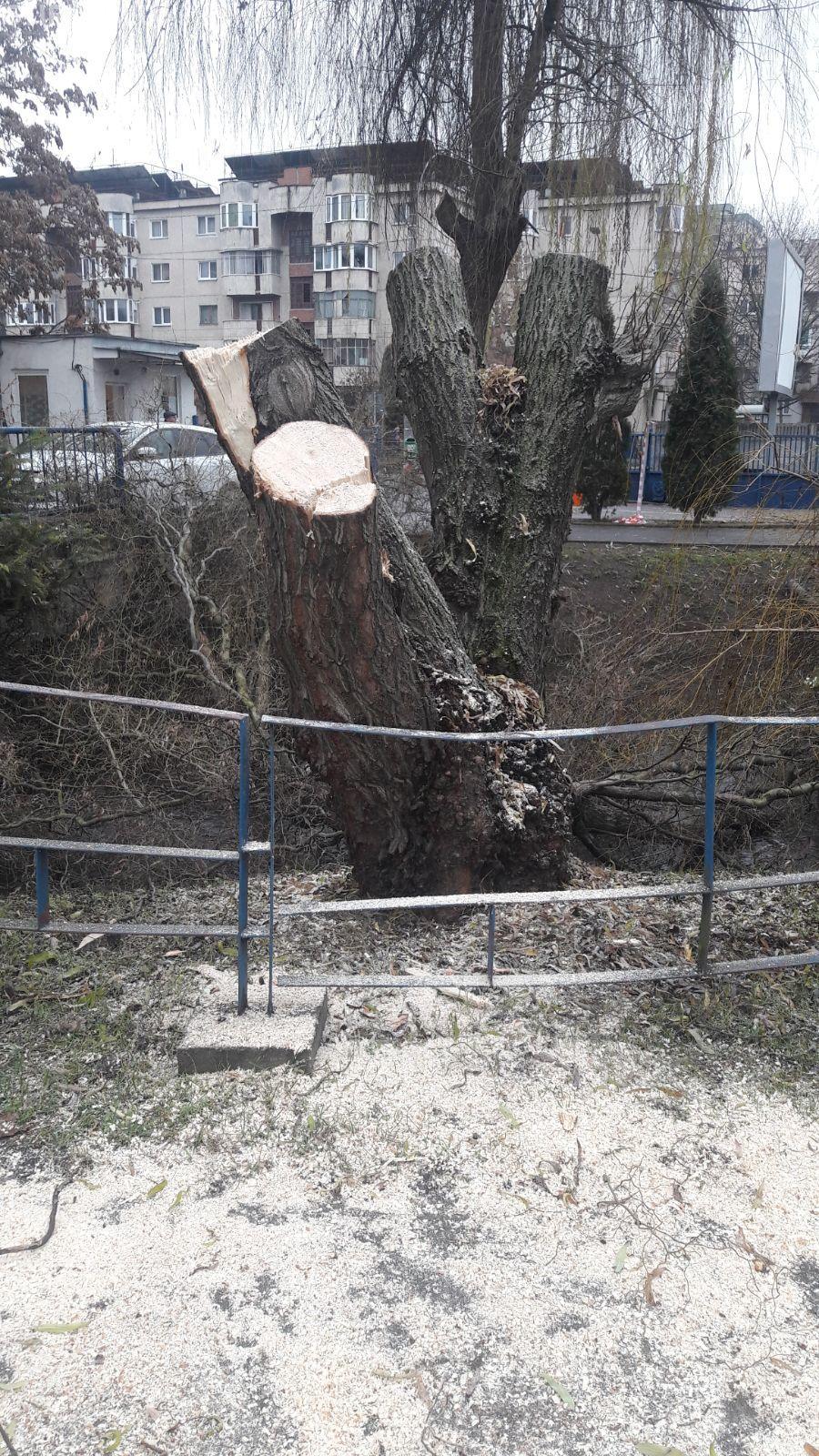 Defrișări în parcul Iuliu Hațieganu - FOTO