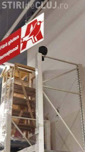 """""""Vizitator"""" surpriză la Auchan din Iulius Mall Cluj. O pasăre zboară liberă prin hypermarket FOTO"""