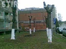Boc: Toți copacii care sunt toaletați vor avea dosar cu probă martor