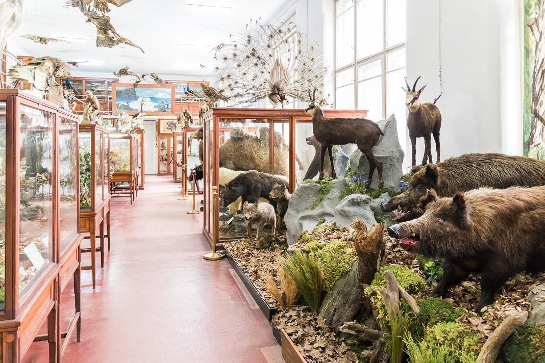 Se redeschide Muzeul Zoologic UBB Cluj