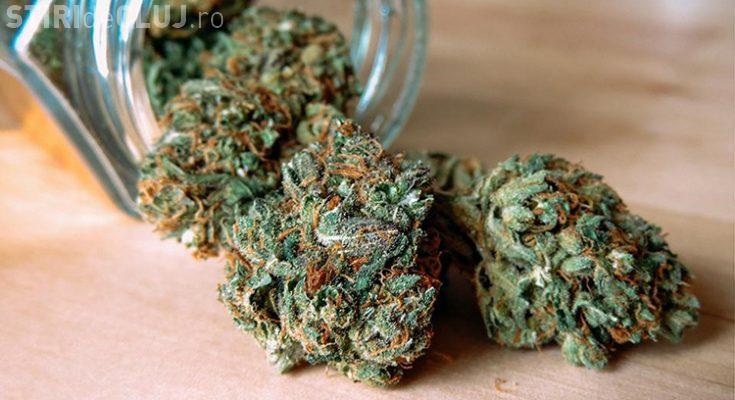 """Trafic de droguri la Cluj! Un tânăr a fost """"săltat"""" de polițiști după ce a ridicat un colet cu 10 kg de cannabis"""