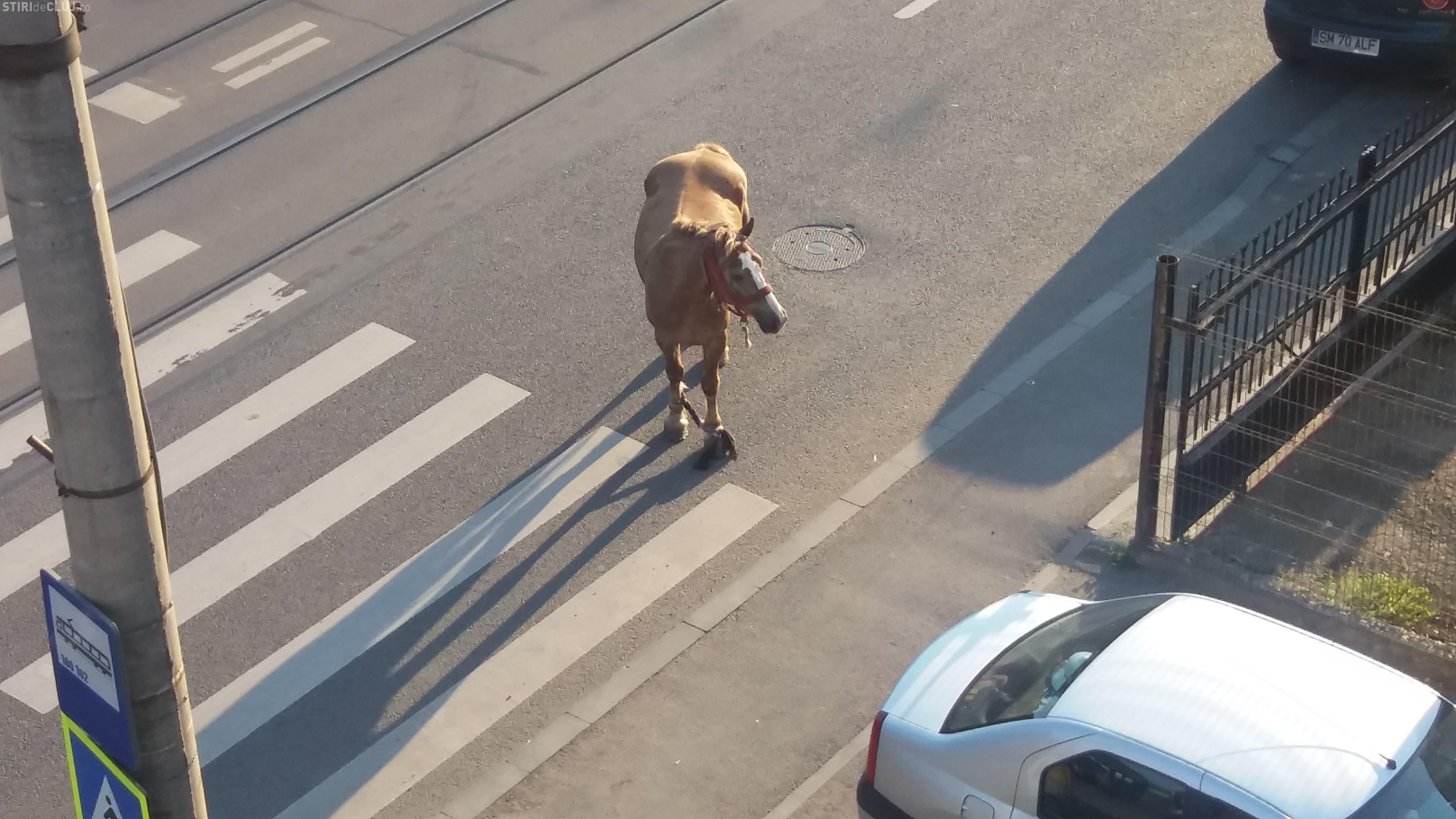 Cal liber pe Bulevardul Muncii. Animalul se plimba pe stradă - FOTO