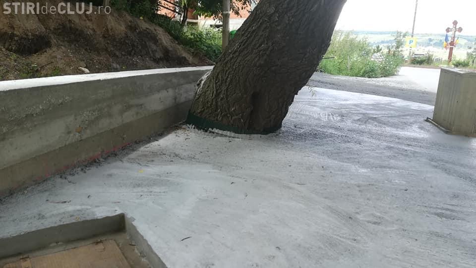 Cluj: La Florești, au betonat o salcie bătrână de lângă biserică - FOTO